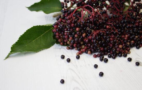 Harvesting Elderberries: Picking, Preserving & Recipes
